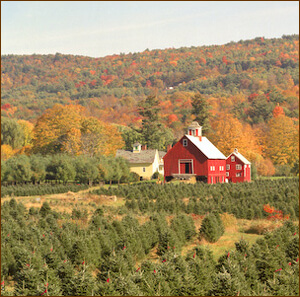 Christmas Tree Farm, Ascutney