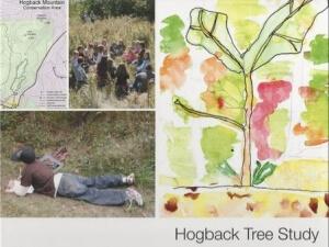 rsz_hogback_tree_study_book