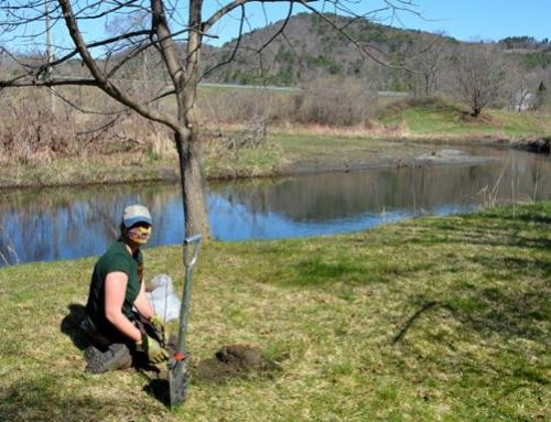 Newly Planted Trees Help Make Local Rivers and Businesses Healthier