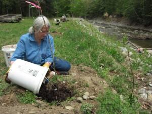 Chickley Tree Planting