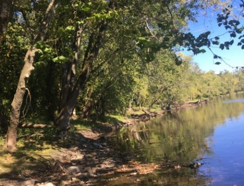 Comments on NH Proposed Wetland Rules