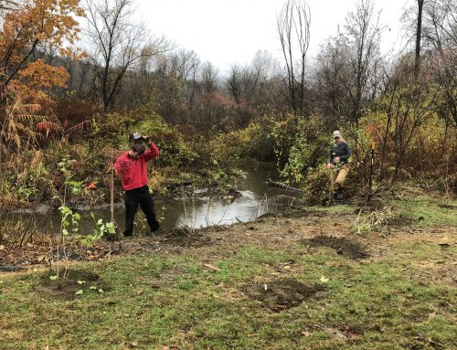 New Trees Planted along Lull's Brook Thanks to State Clean Water Funding