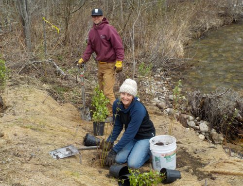News Release – Spring 2017 River Restoration Plantings Completed in NH and VT